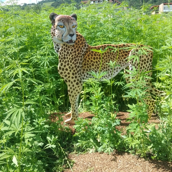 Gepard und Löwe im Hanflabyrinth im Hofburggarten
